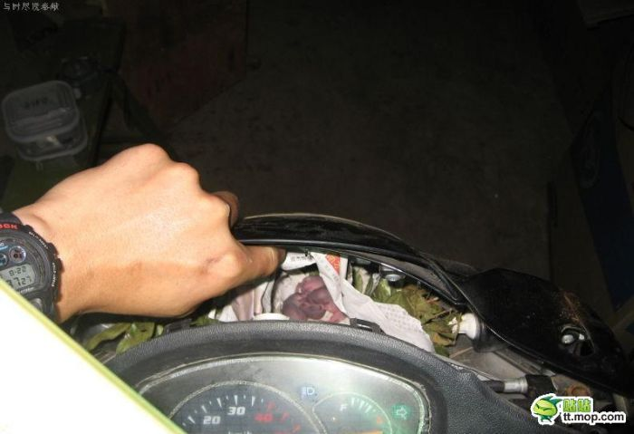 Surprise Inside a Motorbike (7 pics)