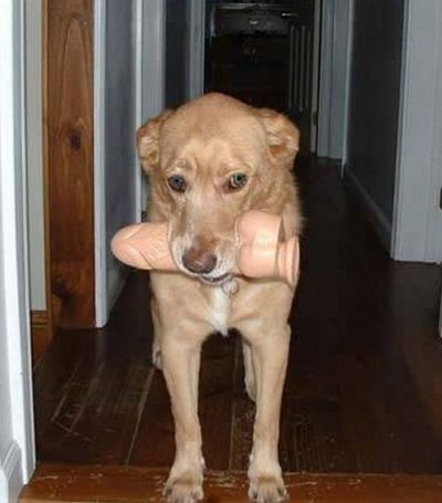 Dogs and Dildos (14 pics)