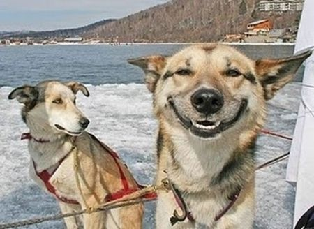 Dogs Who Look High (16 pics)