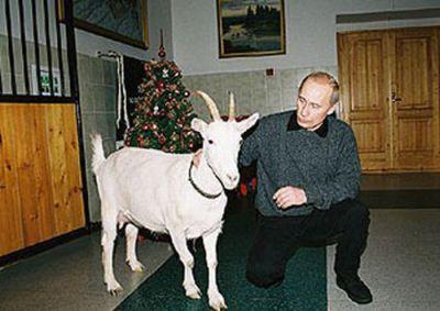 Vladimir Putin With Animals (24 pics)