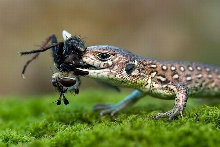 Born to Kill. Awesome Predator Portraits (41 pics)