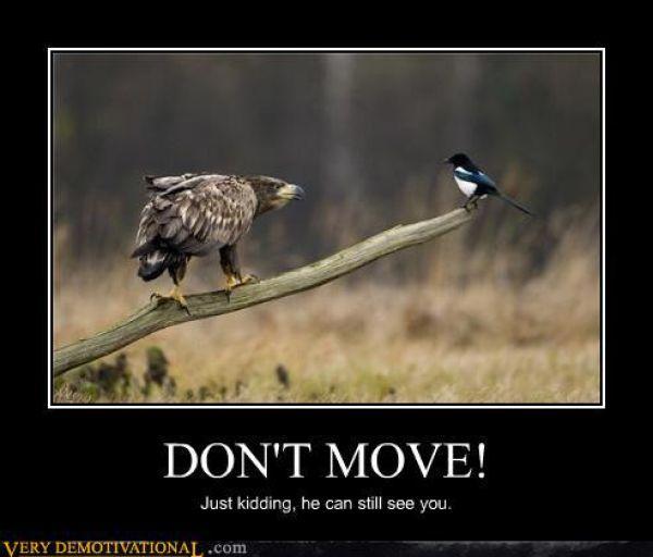 Funny Demotivational Posters (49 pics)