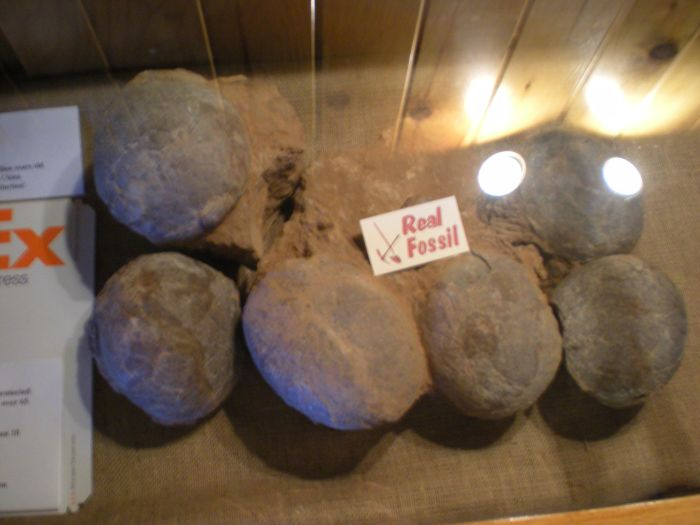 Never Ship Dinosaur Eggs with FedEx (2 pics)