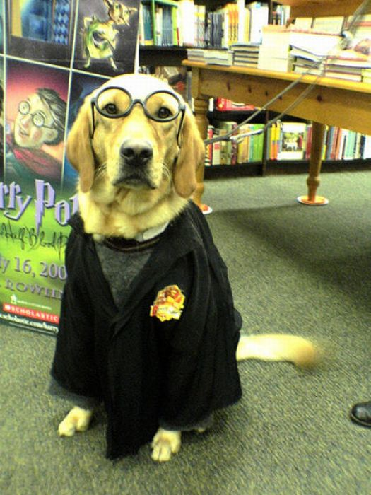 Harry Potter Pets (20 pics)
