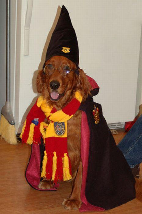 Harry Potter Pets (20 pics)