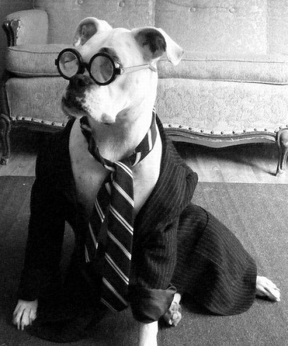 Harry Potter, Harry Potter hayvanları, Harry Potter canavarları, Harry Potter resimleri, komik Harry Potter resimleri