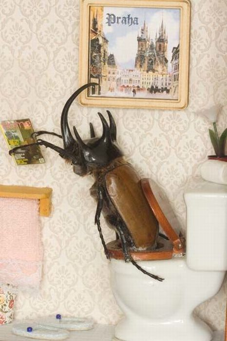 Beetles Take Over Human World (32 pics)