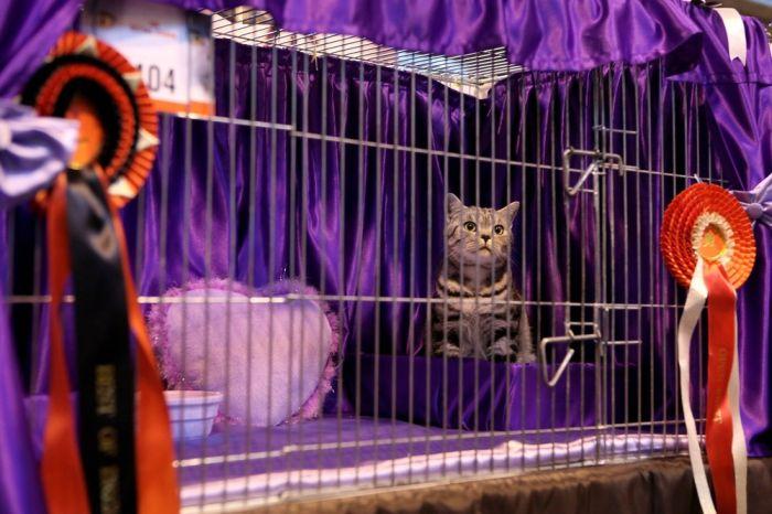 The Supreme Cat Show (15 pics)