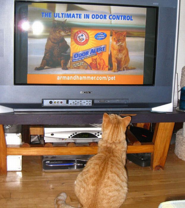 Pets Watching TV (78 pics)