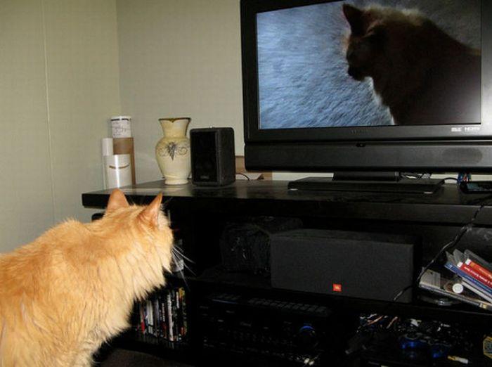 http://cdn.acidcow.com/pics/20101122/pets_watching_tv_20.jpg