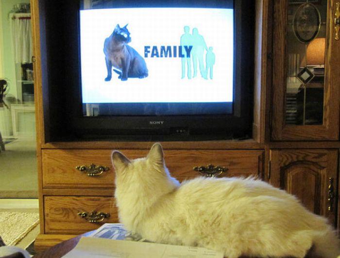 http://cdn.acidcow.com/pics/20101122/pets_watching_tv_21.jpg