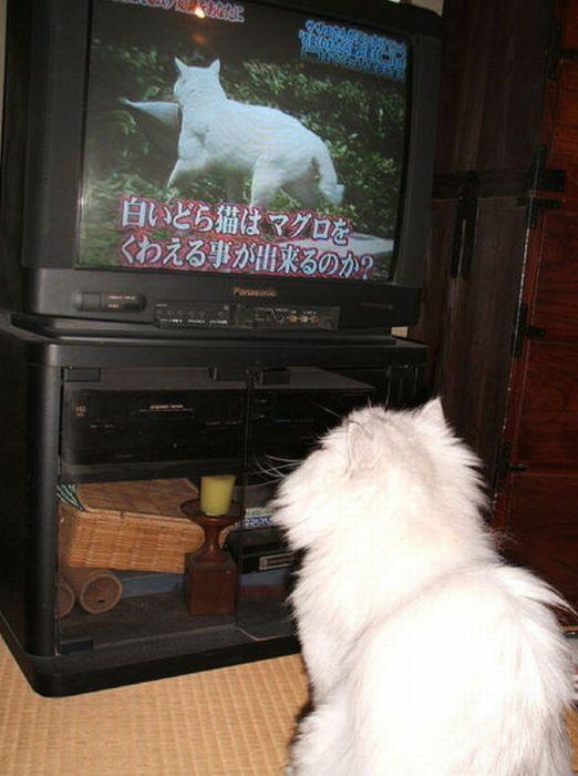 http://cdn.acidcow.com/pics/20101122/pets_watching_tv_22.jpg