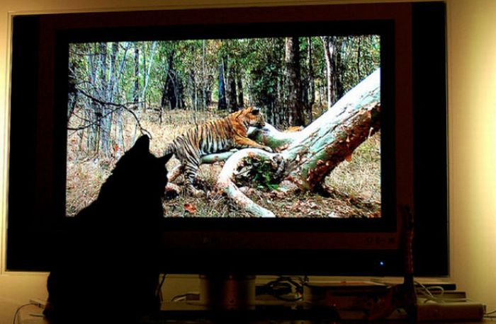 http://cdn.acidcow.com/pics/20101122/pets_watching_tv_24.jpg