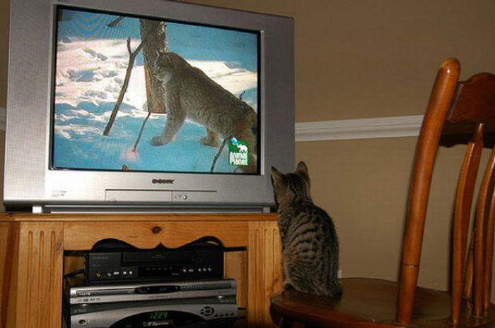 http://cdn.acidcow.com/pics/20101122/pets_watching_tv_25.jpg