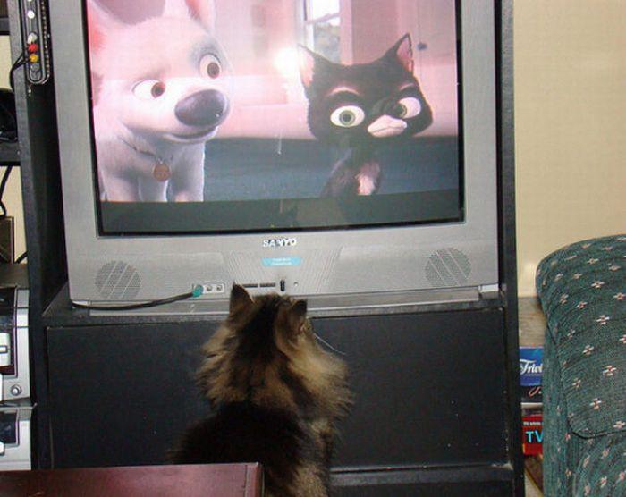 http://cdn.acidcow.com/pics/20101122/pets_watching_tv_27.jpg