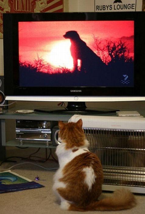 http://cdn.acidcow.com/pics/20101122/pets_watching_tv_28.jpg