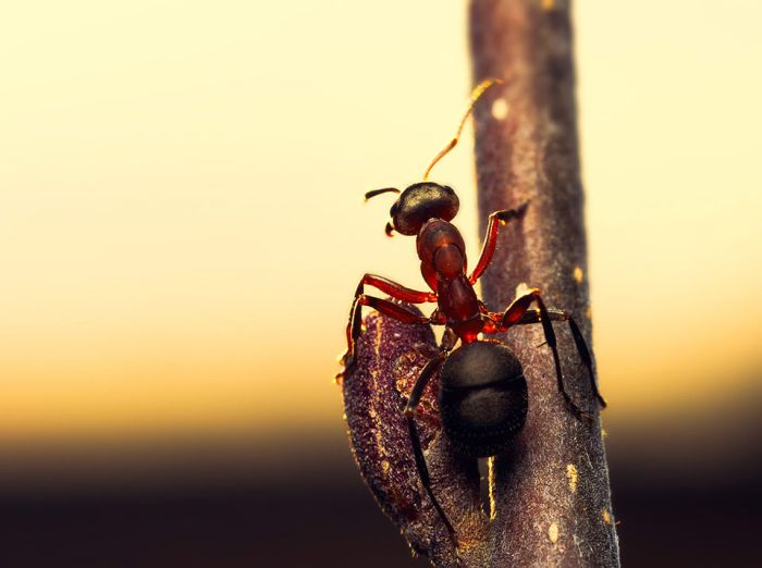 Macro Photography by Joni Niemela (23 pics)