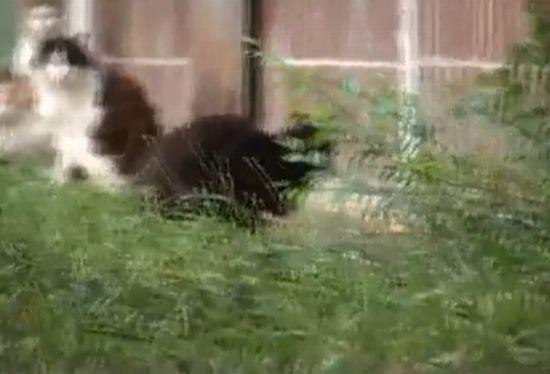 Rat vs Cats