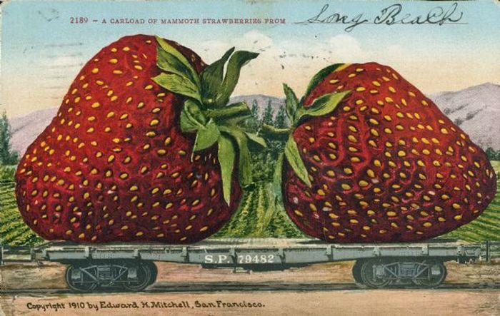 Tall-Tale Postcards (73 pics)