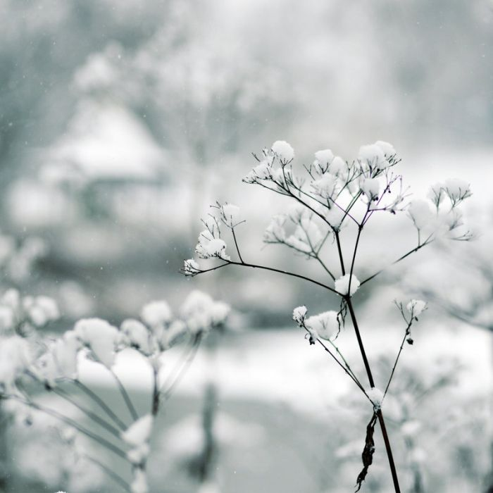 Beautiful Winter Photos (31 pics)