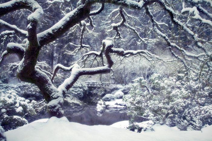 Les Saisons Beautiful_winter_photos_21