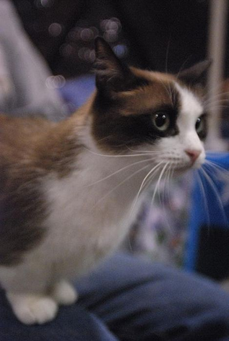 Cute Cats (34 pics)