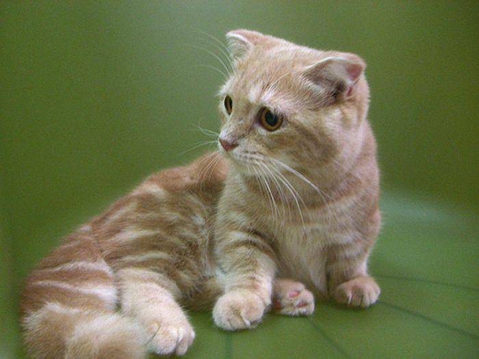 Gatos Lindos (gatos De 4 Patas)