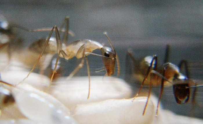 The Birth of an Ant (10 pics)