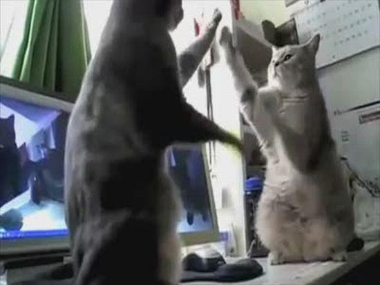 Talking Cats Play Pattycake