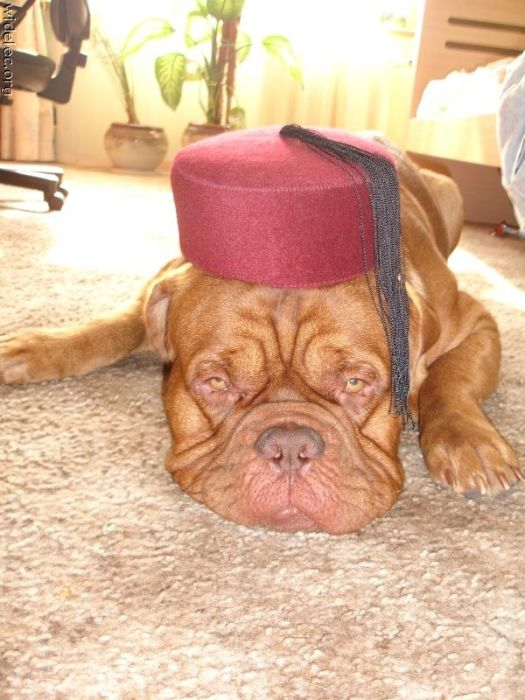 Funny Dogs (110 pics)