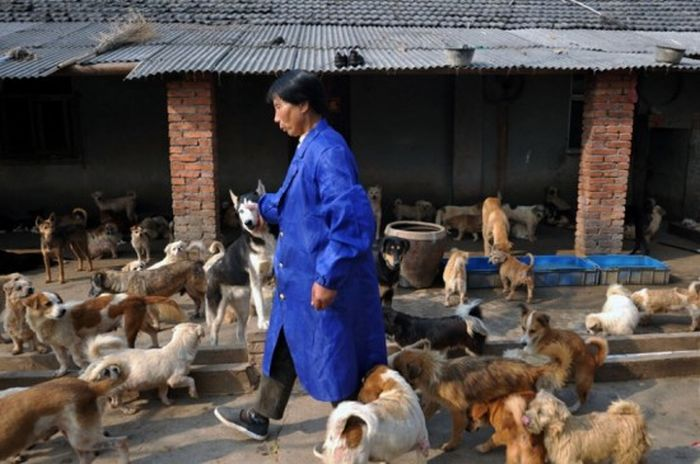 1,500 Dogs and 200 Cats (15 pics)