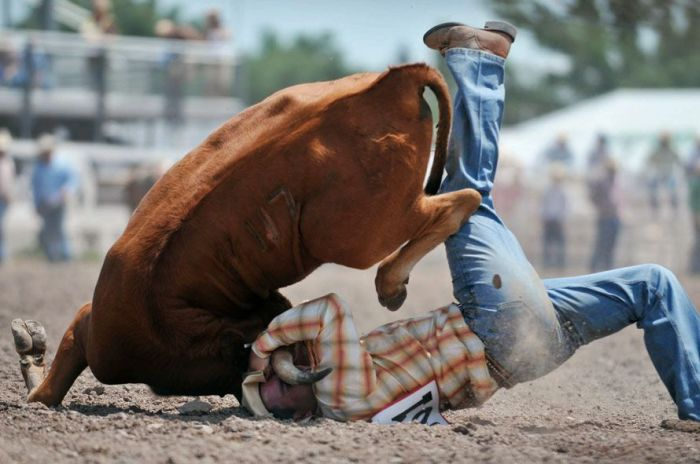 Most Dangerous Moments of Rodeo (17 pics)