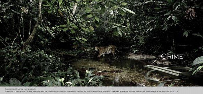 Animal Protection Ads (100 pics)