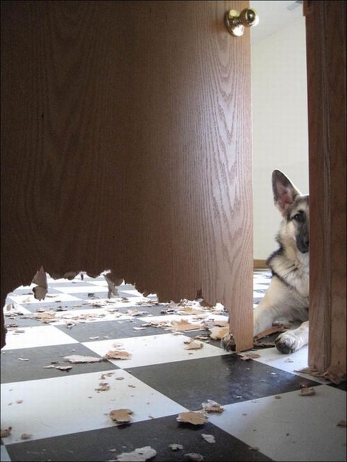 Good Dog (2 pics)