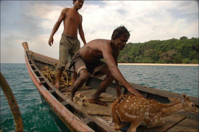 Fishermen Saved a Deer (8 pics)