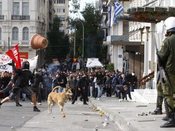 Riot Dog is Back (7 pics)