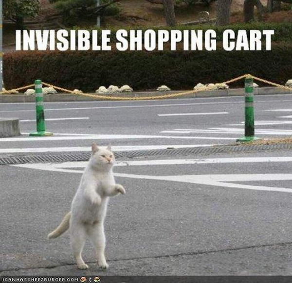 "The Best ""Invisible"" Cat Pictures (17 pics)"