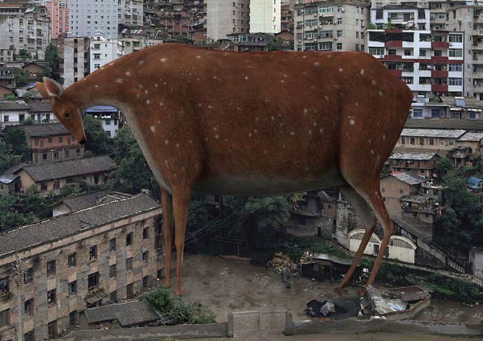 Giant Animals (6 pics)