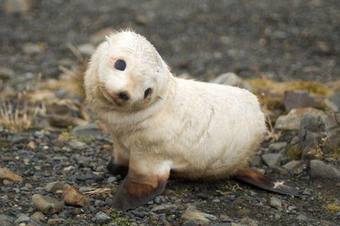 Cute Baby Seals (101 pics)
