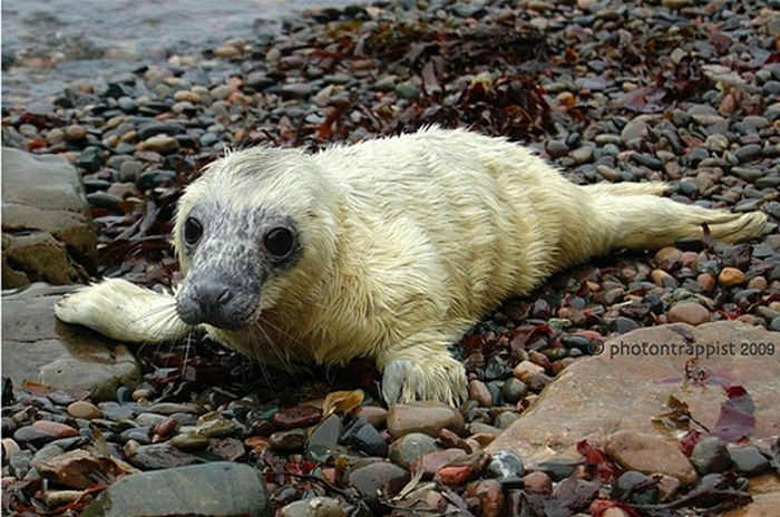 Cute Baby Seals (101 pics)