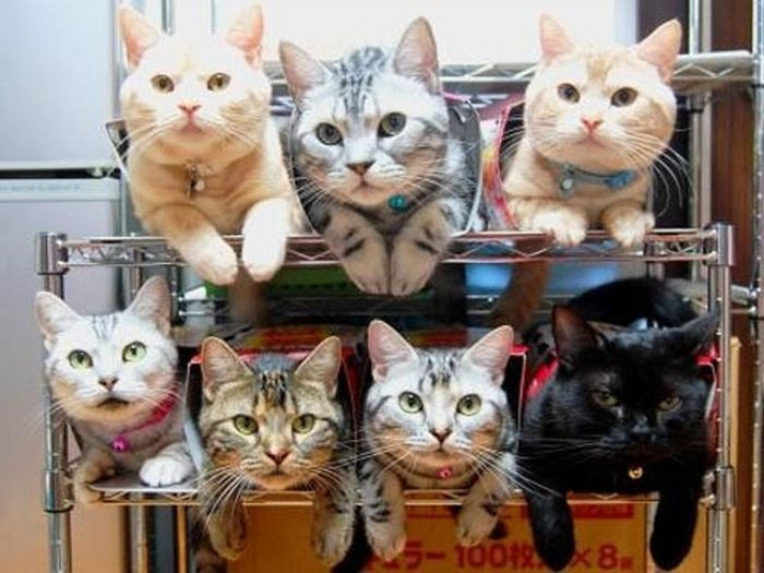 How to Organize Your Cats (15 pics)