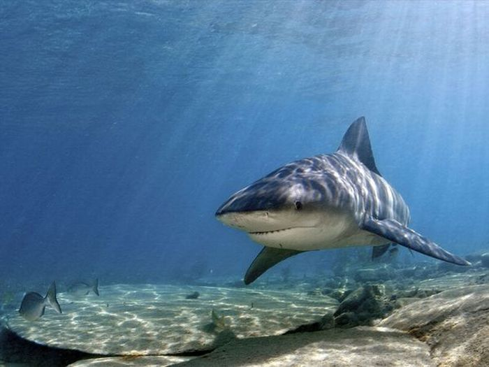 Shark Photos (11 pics)