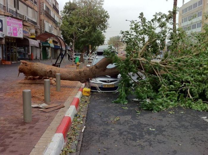 Tree Destroys Car (9 pics)