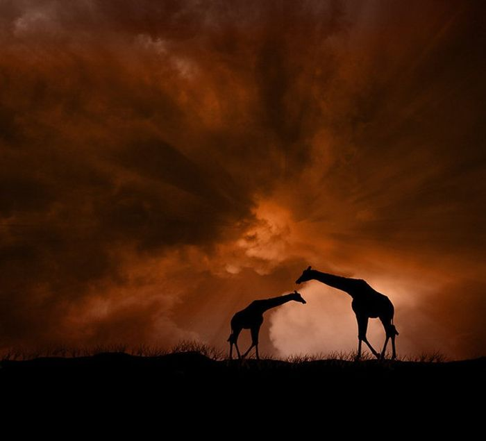 Beautiful Manipulated Photos by Peter Holme III (34 pics)