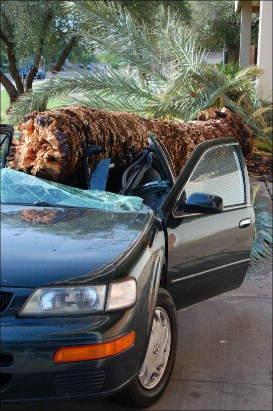 Palm Destroys Car (4 pics)