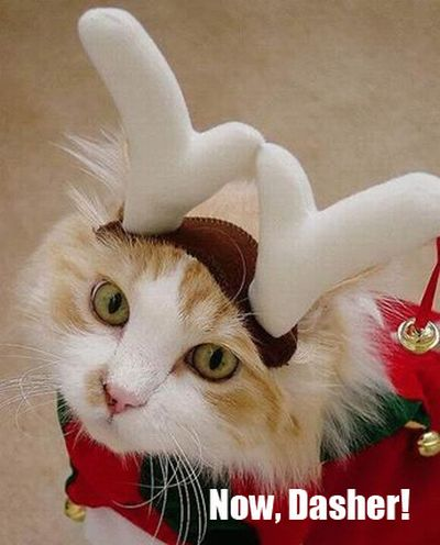 The Night Before Christmas, As Told By Cats (25 pics)