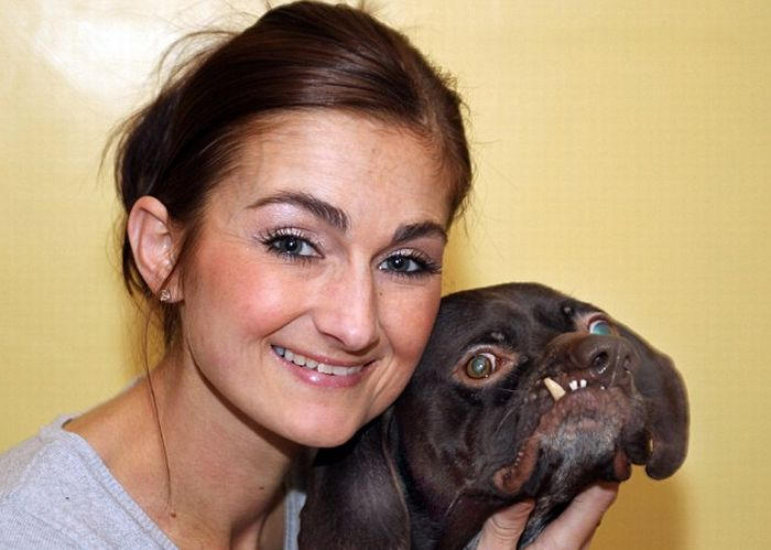 Britain's Ugliest Dog Found New Home (3 pics)