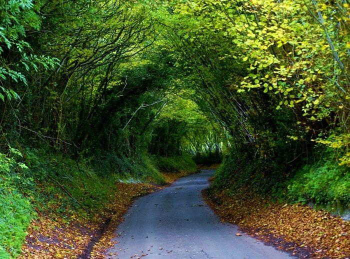 ¡¡¡El maravilloso mundo en el que vivimos!!! - Página 2 Beautiful_roads_43