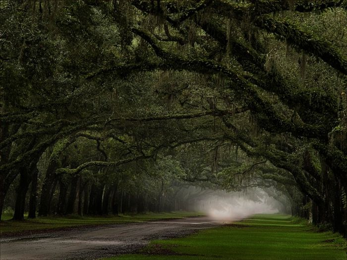Beautiful Roads (99 pics)