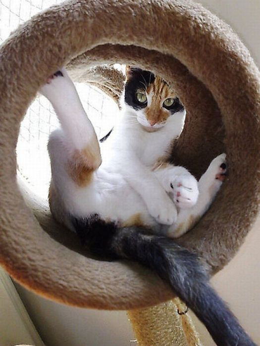 Cats in Awkward and Strange Positions (49 pics)